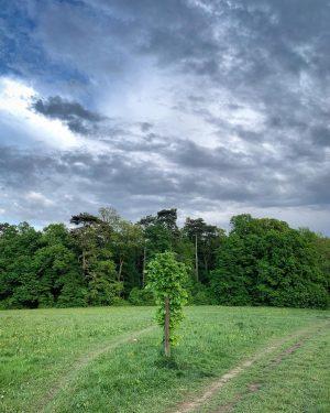 Nach dem Regen ist vor dem Regen! 😏🌧 #wienerwald #biosphärenoark #igersvienna #igersaustria #naturelovers ...