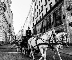 Horse upon a time in Vienna 🐎⌛📸 . . . #tb #wien #vienna ...