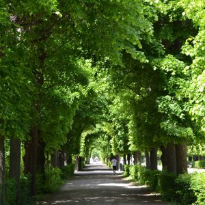 #garden #ogrody #schönbrunn #schloss #palace #wien #wiedeń #Vienna #austria #österreich #weekend #vienna_go #Viennanow ...