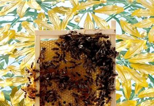 Happy World Bee Day from our Secession bees! #ViennaSecession #honey #bees