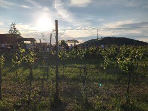 Heute relaxen im Weingarten. 😎🌞 #wieningeramnussberg #wien #wieninger #buschenschank Wieninger am Nussberg