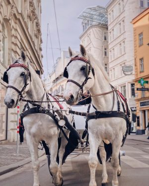 Sylvie + Trudie. ❣️ Aren't they two beautiful looking & elegant ladies? 🐎 - They both have...