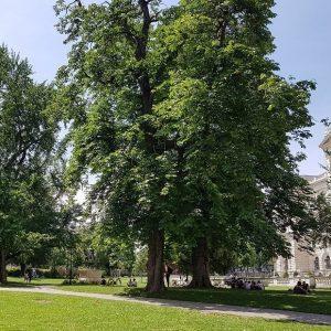 Der Burggarten hat immer Saison – und das schon seit knapp 200 Jahren. ...