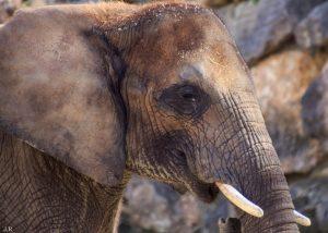 (Kindheits-) Lieblingstier 😍 . . . #tb #zoovienna #vienna #tiergarten #schönbrunn #elephant #afican ...