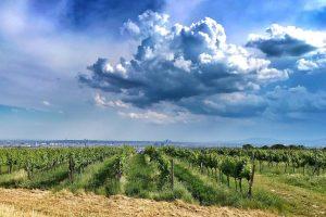 #vienna #wieningeramnussberg #wieninger #nussberg #relax #fun #wine #summer #weekendtrip #friendsontour #rainbow #beautiful #bestview #hiking #krapfenwaldbad #heuriger #winewithaview...