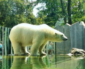 #vienna #austria #zoo #garden #schonbrunn
