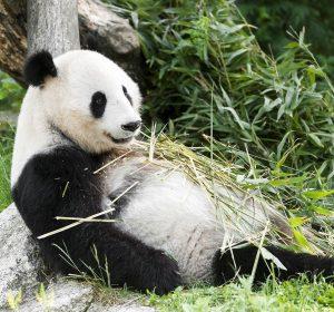 🎀 GEWINNSPIEL 🎀 Die Giant Panda Best Friends Awards 2019 wurden vergeben! Gleich ...