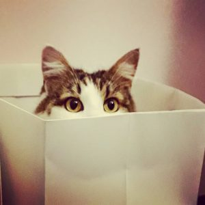 Buh! #catinthebag #catsofinstagram #catstagram #luzi #deutschlanghaar #europäischlanghaar #katze #instacat Floridsdorf