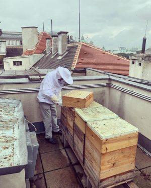 #Bee careful ! In #beenna @viennatouristboard @visitaustria #viennanow