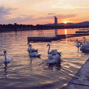 Abendstimmung an der Donau. 🌅 Gute Nacht Wien! ❤️ . . . #danuberiver #copabeach #swans #copakagrana #wienerwildnis...