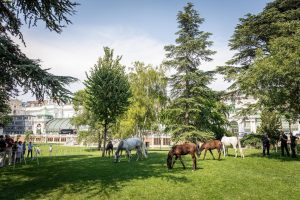 "Kickoff for 🐴""Piber meets Vienna""🐴 For the first time the sweet foals and mares of the Lipizzan..."