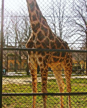 Zoo Station . #tiergartenschönbrunn #zoo #adayatthezoo #zoology #zoologico #animalkingdom #wild #animals #animales #salvajes #tiergarten #schönbrunn #wien #vienna...
