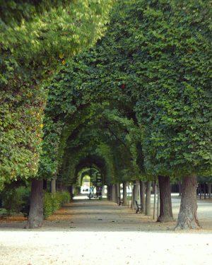 #парк#shonbrunn#шонбрун #паркшонбрун#schönbrunn #vienna#відень❤️ #відень #віденьказковий #vienna_go#austriacollective #parksofvienna#viena#loveviena #austereich #park#moody_nature #tree_pictures #treemagic #tree_shotz #tree_perfection ...