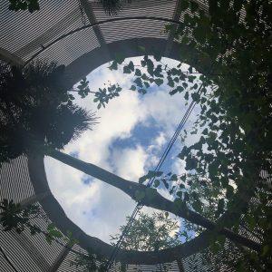 #himmelüberwien #museumsquartier #frischeluftistgesund #waldoase