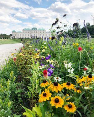 Oh Wien, du kleine Schönheit. 🌻 | #vienna #visitvienna Belvedere Wien Schlossgarten