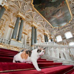 Heute wird der internationale Tag der Katzen begangen. Nicht nur in Österreich sind die Katzen die beliebteste...