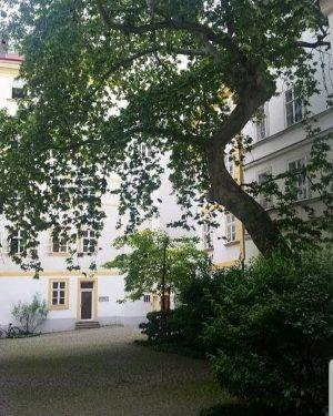 VIENNA/ Wiener Innenhöfe _____________________ #goodmorningvienna #viennanow #wiennurduallein #wienistanders #wienmalanders #innerestadt #innenhöfe #wienerinnenhöfe #naturinthecity ...