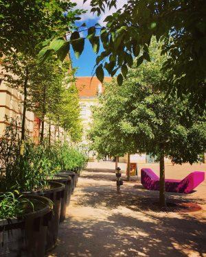 😍#summerinvienna 😎 #strollingaround #museumsquartier #mqwien #architekturzentrumwien #urbangardens #urbanjungle #climatechange #natureinthecity #enjoythemoment #itsinthedetails #wien ...