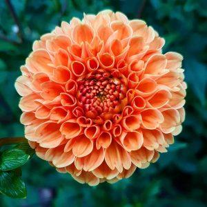 #flower #flowers #favv_flowers #rainbow_petals #splendid_flowers #loves_garden #9vaga9 #ptk_flowers #flowermagic #flowersofinstagram #paradiseofpetals #9vaga_flowersart9 #petal_perfection ...