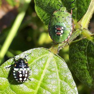 #details #bugs