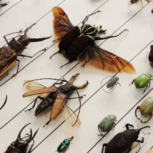 Will insects become extinct? What do we know and what can we do? ...