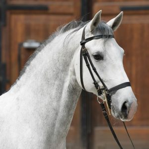 What do you think of Conversano Bellornata I 🐴🐎? . . This talented boy 🐎 is trained...