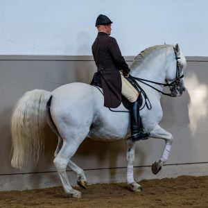 First Chief Rider Eder and Siglavy Rubina I 🐴 executing a perfect piaffe during the daily morning...