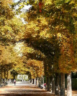 𝐇𝐞𝐥𝐥𝐨 𝐚𝐮𝐭𝐮𝐦𝐧, 𝐬𝐡𝐨𝐰 𝐮𝐬 𝐚𝐥𝐥 𝐲𝐨𝐮𝐫 𝐜𝐨𝐥𝐨𝐫𝐬 🍂 #doors2wien #wien #vienna #stadtwien #wienliebe #augarten #augartenpark #autumn #fall...
