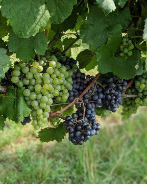 Es wird ein Wein sein 👀👍😉 / www.checkvienna.com / #checkvienna #vienna #wien #austria #trip #vacation #urlaub #igersvienna...