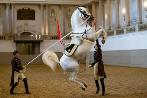 Do you know which school jump this is? 🐎🐴❤️ . . . ©SRS/ Petra Kerschbaum . ....