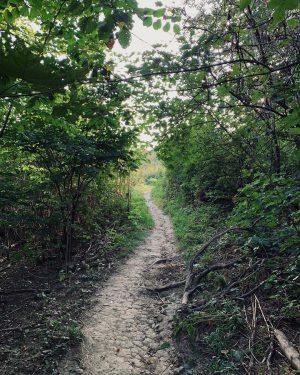 Vom Hermannskogel am Weg zum Südtiroler Trail #sharedtrails #wienerwald #wwtrails #igersvienna #igersaustria #singletrails ...