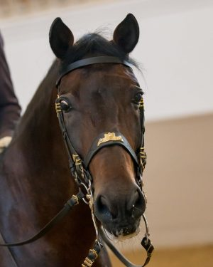 Pluto Bellornata 🐴😍 Bellornata is 21 years old and one of the most experienced stallions 🐎 at...