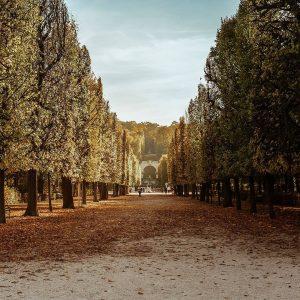 #schonbrunn #viennagram #wienliebe #feelaustria #wieden #schonbrunnpalace #schönbrunn #visitvienna #austriatoday #topeuropephoto #visitaustria #igersaustria #igersvienna #autumnleaves #goldenlight #austriatrip #viennanow...
