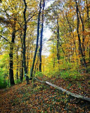#vienna #forrest #wald #wien #heimatliebe #autumn #nature