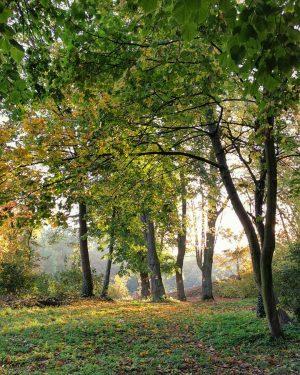 Goldluft #wien#vienna#vienne#austria #döbling#amhimmel #igersvienna#igersaustria #wienmalanders#forest #wienamsonntag#autumn #herbstliebe#vienna_austria #naturelovers#baumliebe #treelove#eswirdherbst #herbstsonne#waldliebe #trees#waldspaziergang #wiennurduallein#stadtwien