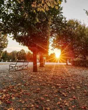 Leavesdropping 🍁🍂🌟 • • • #schönbrunn #sunsetstars #leavesontheground #touristinmycity #städtetrip #beautifulsunsets #beautifulcities #feelaustria #parkbench #parkbank