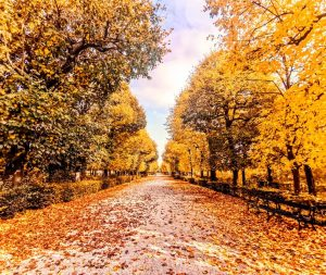 Fall has always been my favorite season. The time when everything bursts with its last beauty, as...
