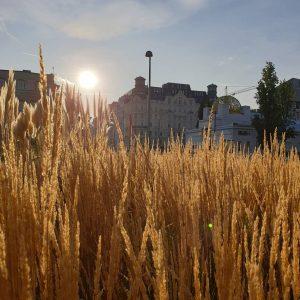 #wien #vienna #herbst #karlsplatz #secession #goldenhour #wienliebe #grüneliebe