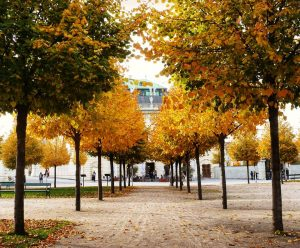 Beautiful autumn scenery in the upper Belvedere Taken a few years ago. . ...