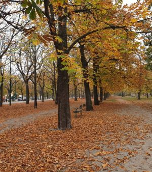 VIENNA/ Wiener Prater ________________ #vienna_city #viennanow #prater #hauptallee #running #wonderlust #streetwalker #laufen #vienna_go ...