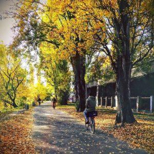 Herbstlicher Sonntag 🍁🍂😊💚#wienliebe #igersvienna Donau Kanal