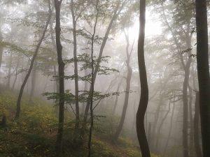 🤓 #herbstfarben #herbstlicht #wald #nebel #orange #wien #vienna #forrest #austria #österreich #autumn #fog #rain #nature #hagebutte #tree...