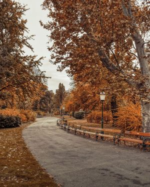 ⠀⠀⠀⠀⠀ Stadtpark