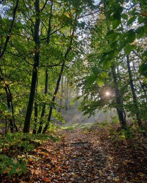 This #herbstliebe #autumn #waldspaziergang #wienerwald #naturparkpurkersdorf #sunlight #herbstlaub #wanderung #loweraustria #oneplus6t #nofilter
