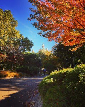 😍#autumninvienna 🍁🍃🍂🌿 #strollingaround #karlsplatzwien #herbstliebe #october🍁 #herbst🍁 #wienerkarlskirche #karlskirchewien #natureinthecity #treesofinstagram #wien🇦🇹 #wienliebe ...