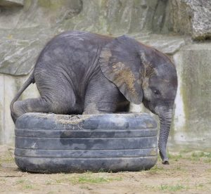 Wir versüßen ❣ euch den Sonntag ☀️ mit Kibali-Content! 🐘 📸 Norbert Potensky . . #viennazoo #elephant...