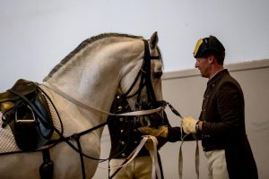 The deserved treat after the perfect performance of stallion Conversano Spadiglia by chief rider Herbert Seiberl 👏🐎...