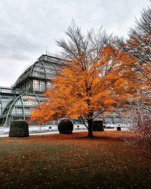 Orange is indead the Fall colour Schönbrunn