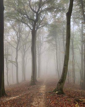 fogtown #latergram #wienerwald #wwtrails #igersvienna #igersaustria #divineforest #biosphärenpark #trailhunter #mountainbike #mtb #mtblife #fromwhereiride #naturelovers #hike #run #trailrunning...