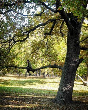 Wer auf einen Baum klettern will fängt unten an Jesuitenwiese